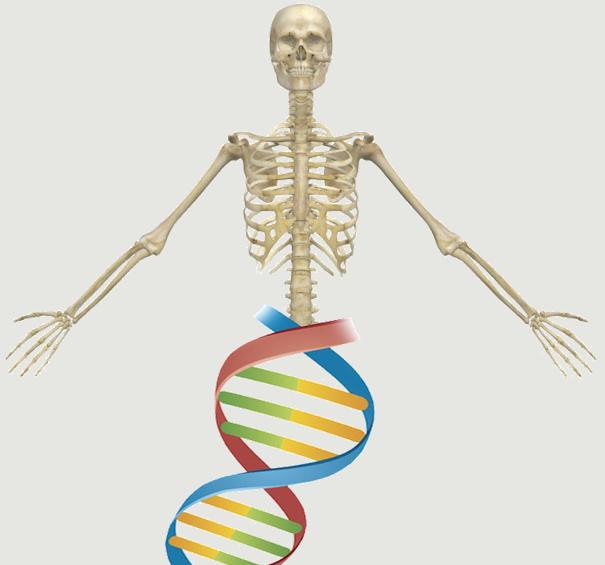 Gazit Skeletal Biotech Lab